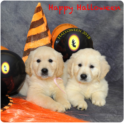 halloween golden retriever of sim 2018